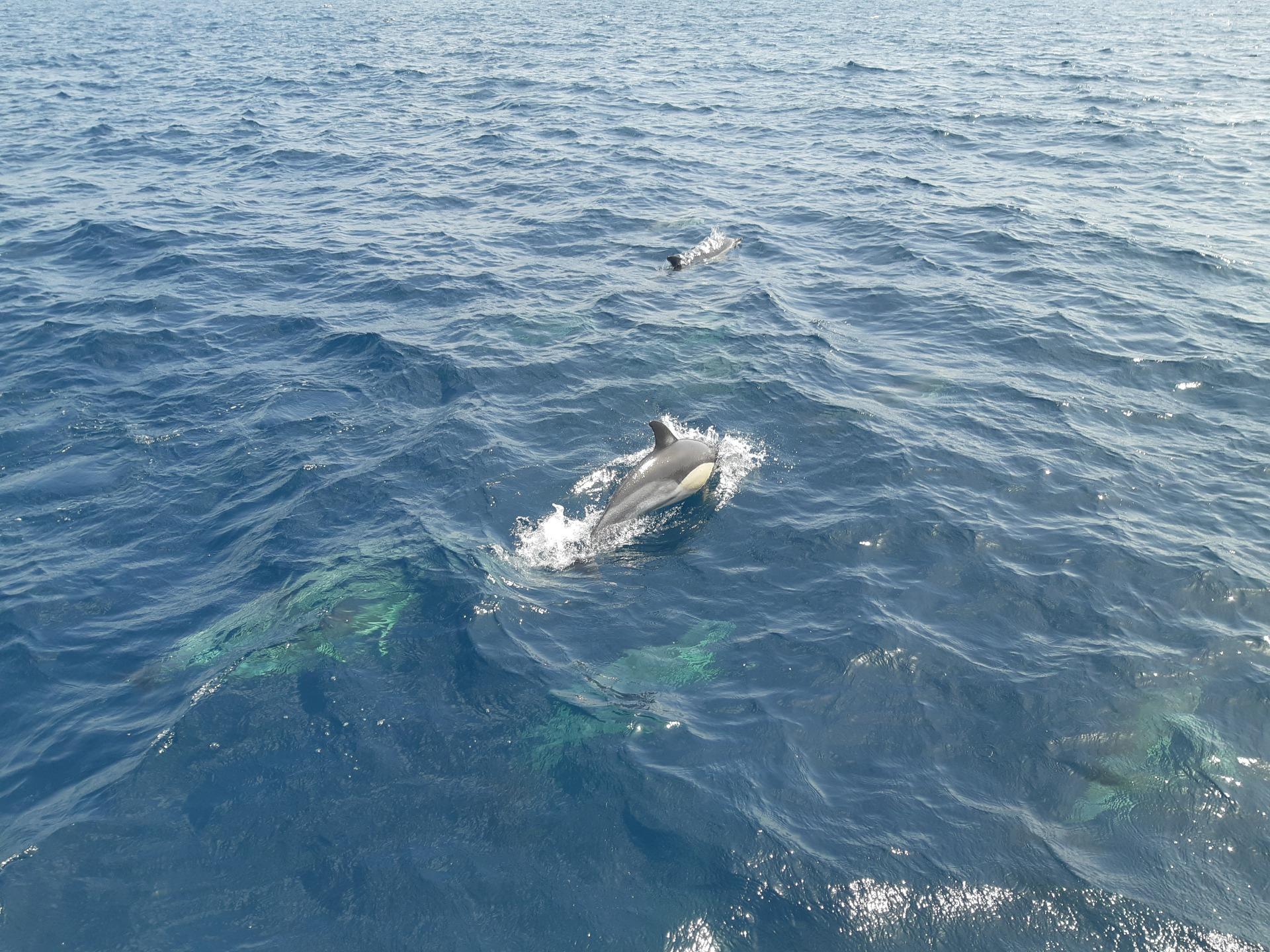 Boat Trip Marbella