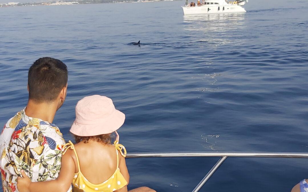 Avistamiento de delfines 2 horas